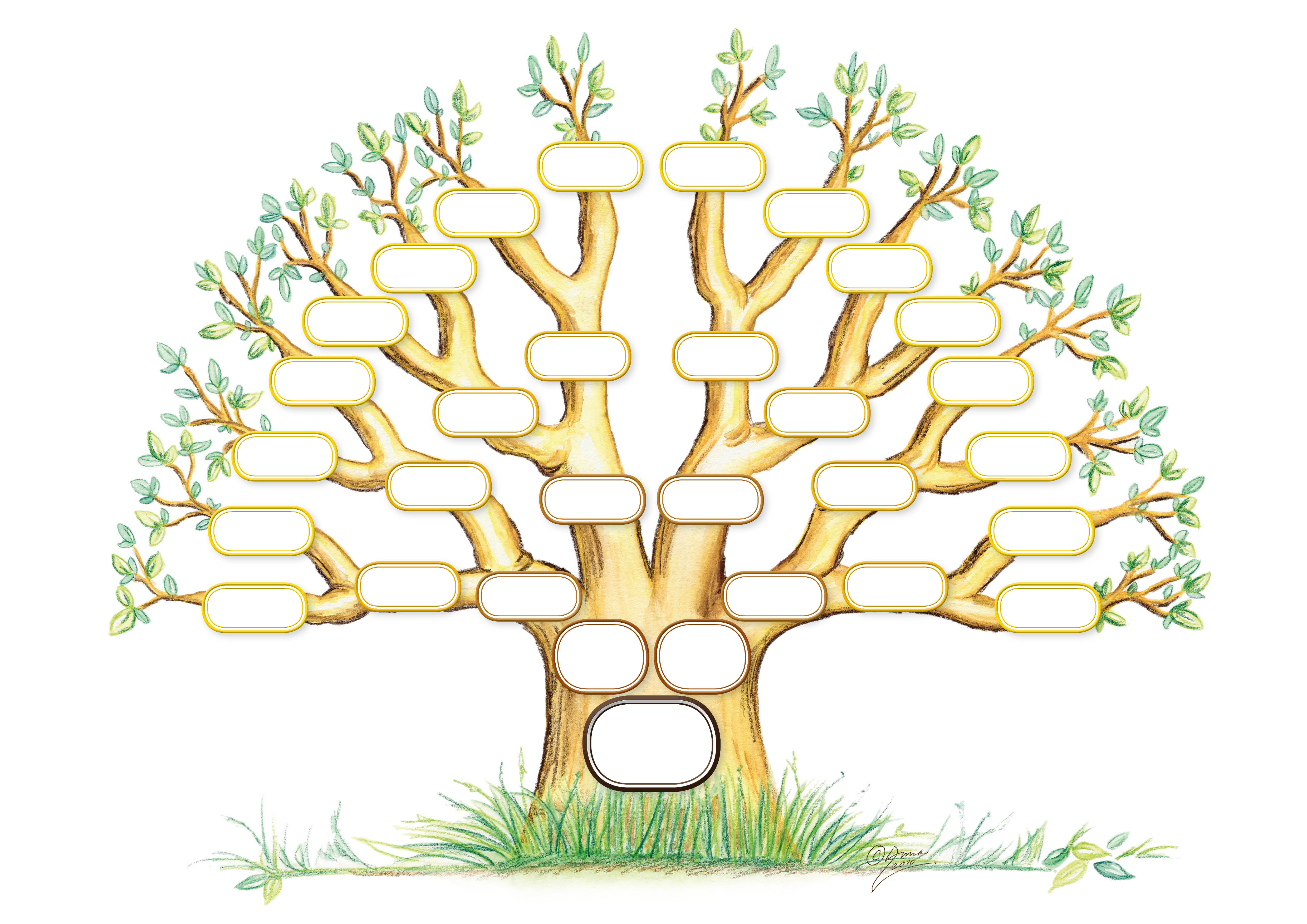 picture of family tree to fill in koni polycode co